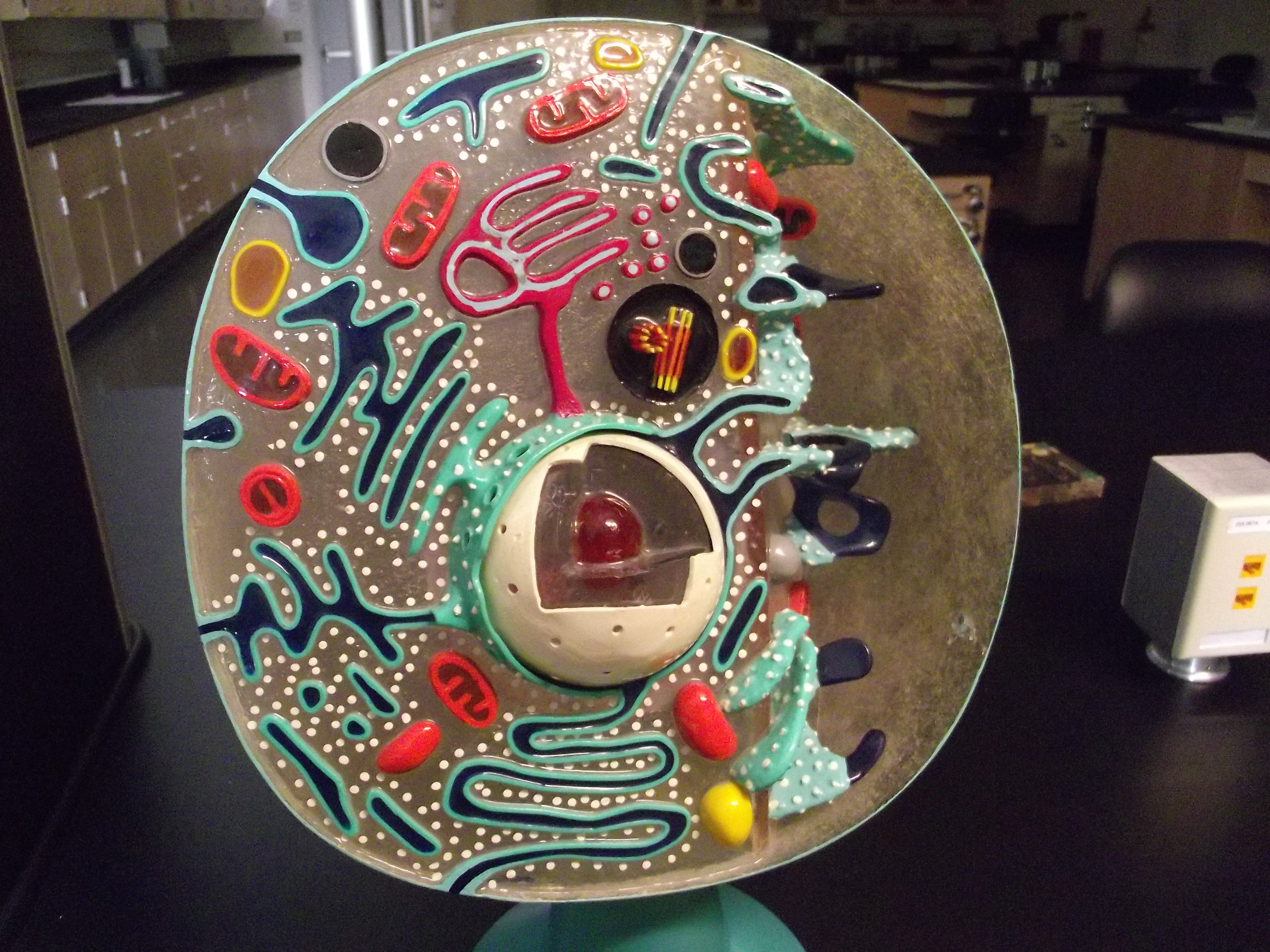 Biology 109 Lab Review For Practicum 1 All Pictures Plant Cell Diagram 3d Model Science Project Pinterest Animal